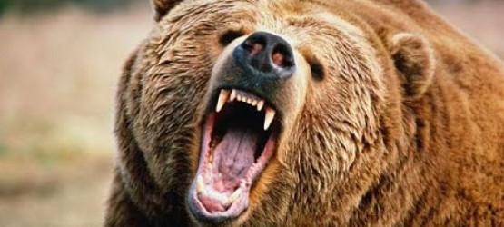 Week In Review: Bear Growls as Global Economy Cools