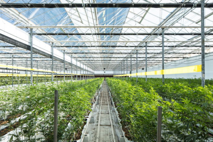 ​Innovative Industrial Properties Is a Defensive Play in the Cannabis Industry