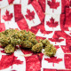 ​How to Find Your Investable Moment in Canada's Massive Cannabis Market