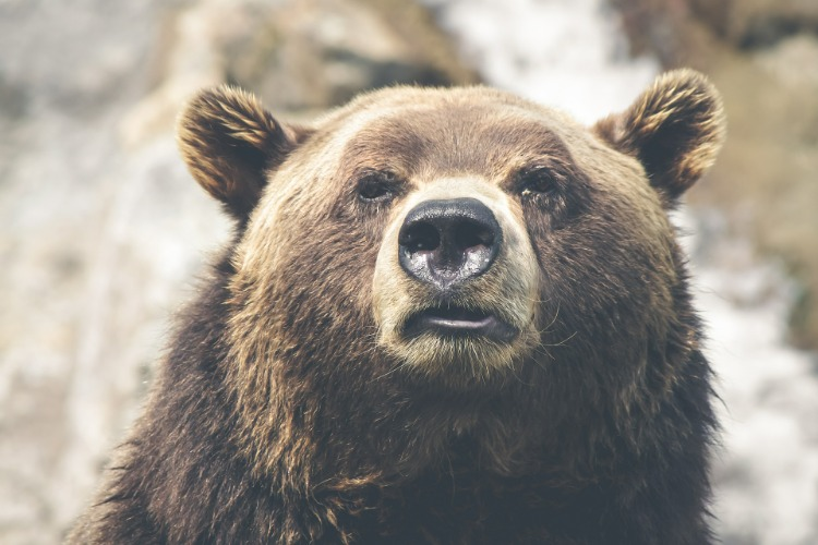 Next Bear Market Will Be Especially Painful for Boomers