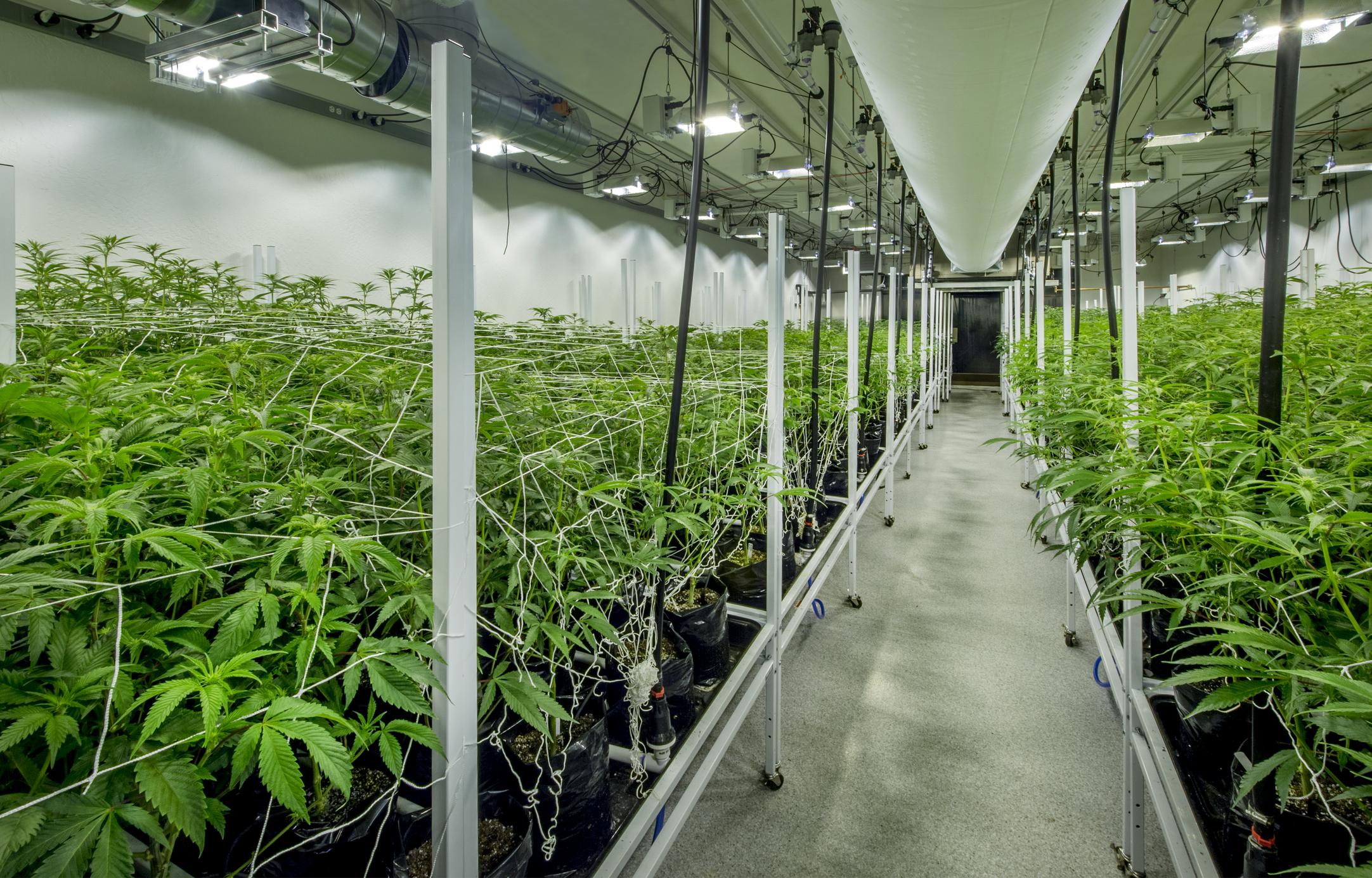 Aurora Cannabis Begins Construction On 800k Sq Ft Aurora