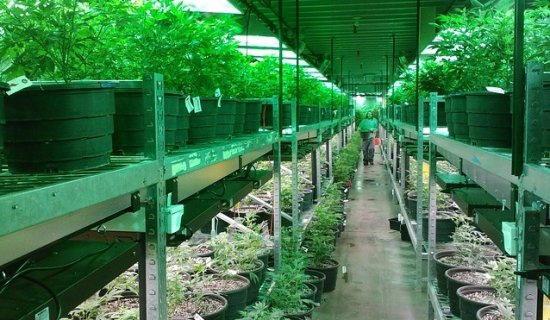 What You Need to Know to Invest in Cannabis Companies