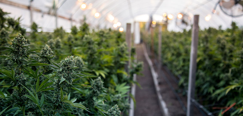 Invictus is Flush With $20 Million in New Funding, Making Cannabis