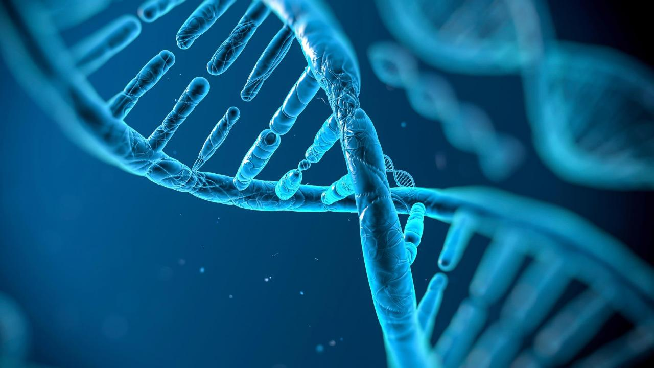 bio bugs the concepts of cell reproduction and heredity
