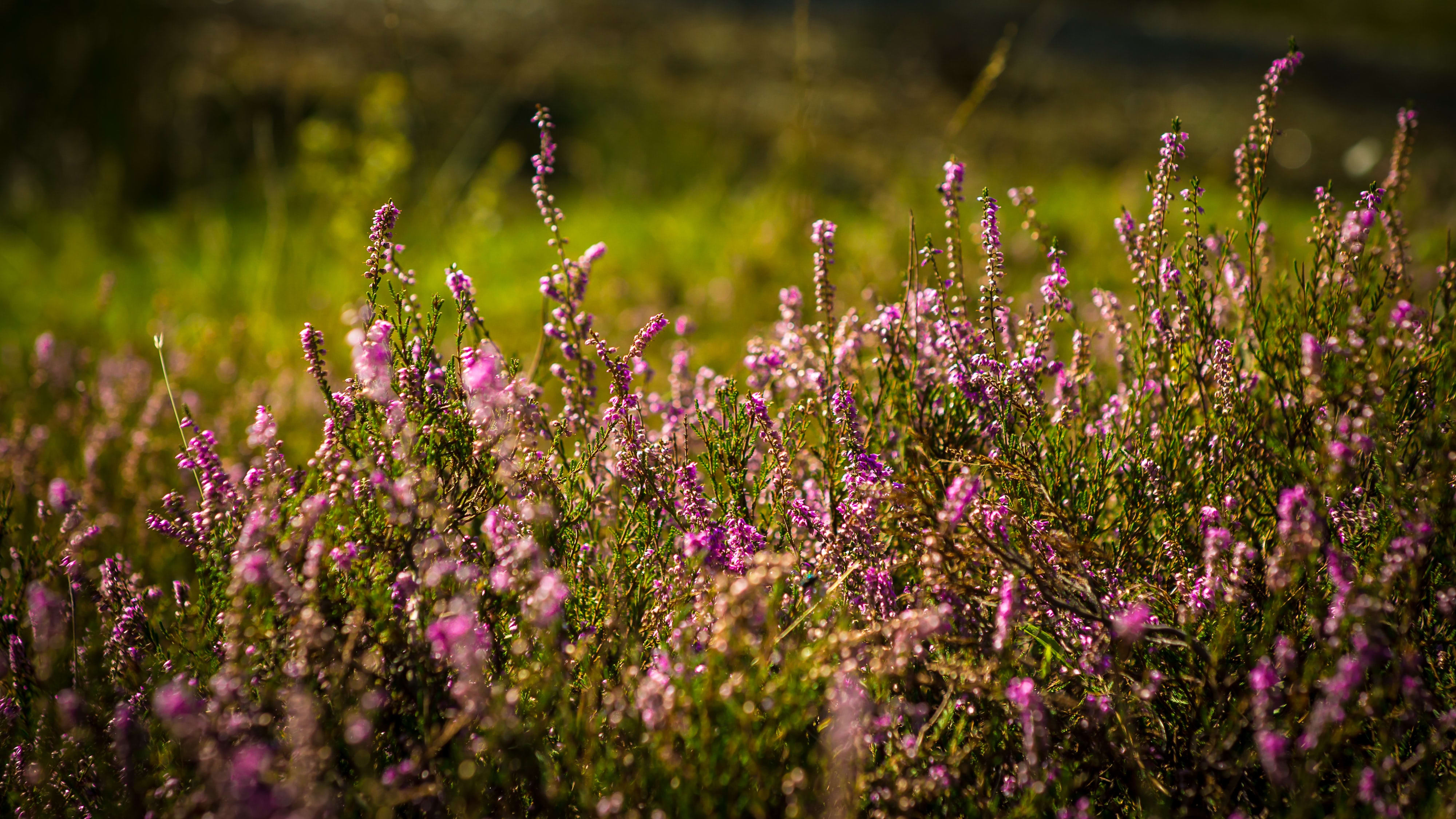 Irish Peatlands central to a new EU-funded Climate Action Initiative