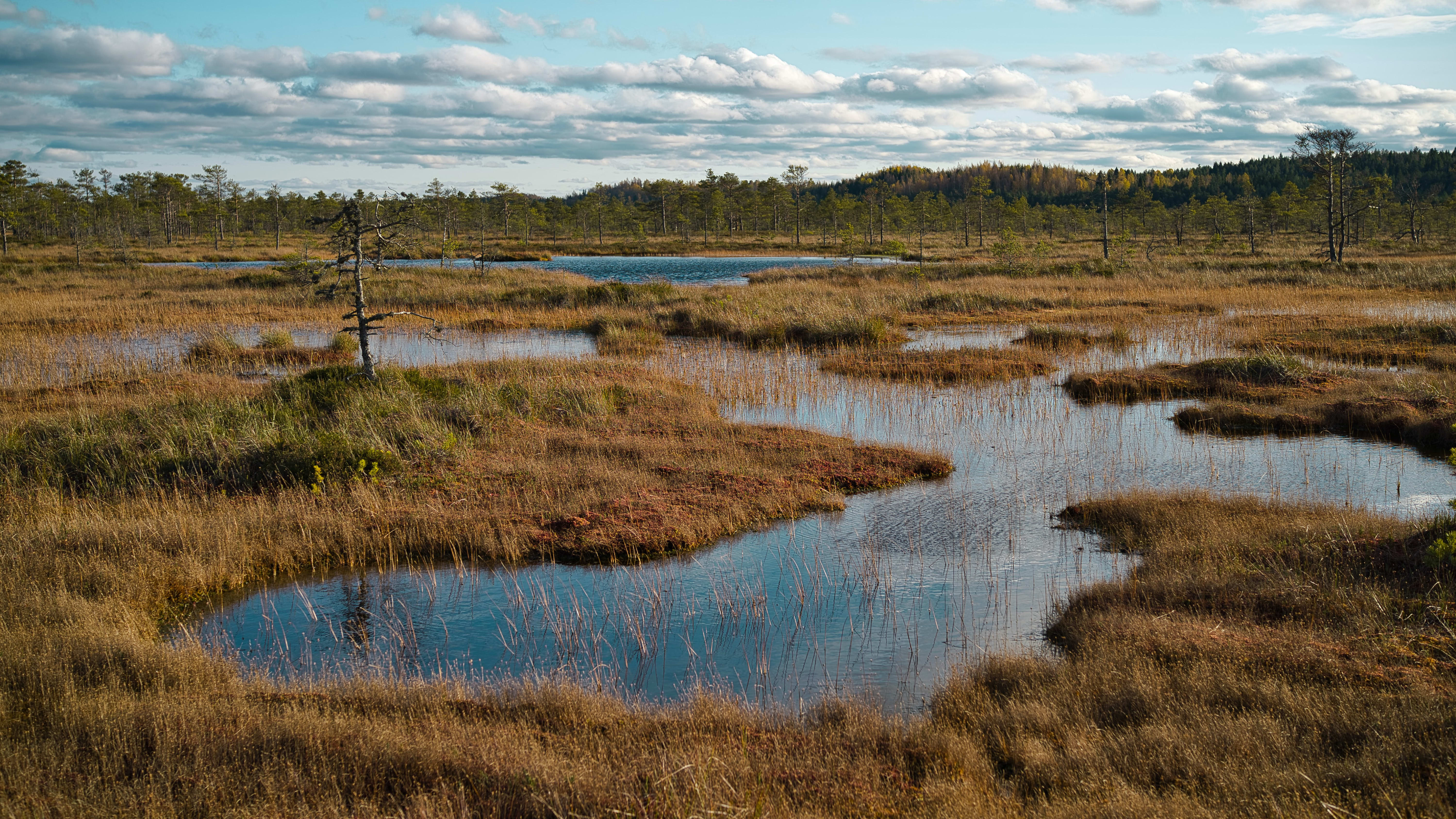 WaterLANDS: New European Green Deal project launched to lead largescale restoration of European wetlands
