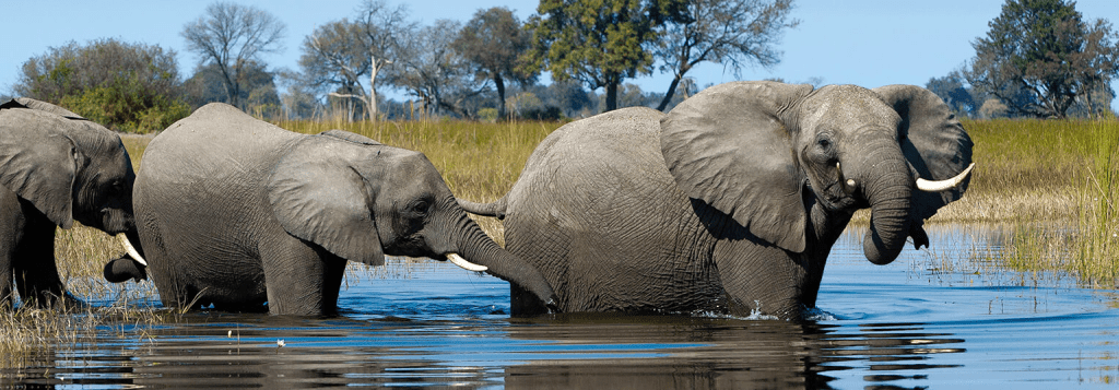 Wilderness & Wellness Safari Okavango Delta, Botswana Mar 25th  - Apr 1st, 2019