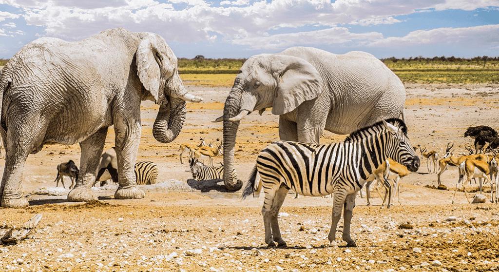 Safari, Surf & Sand THROUGHOUT, NAMIBIA July 14th  - 24th, 2018