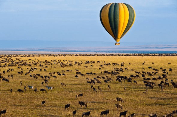 Experience The Great Migration Serengeti + Tarangire, Tanzania July 18th  - 25th, 2021
