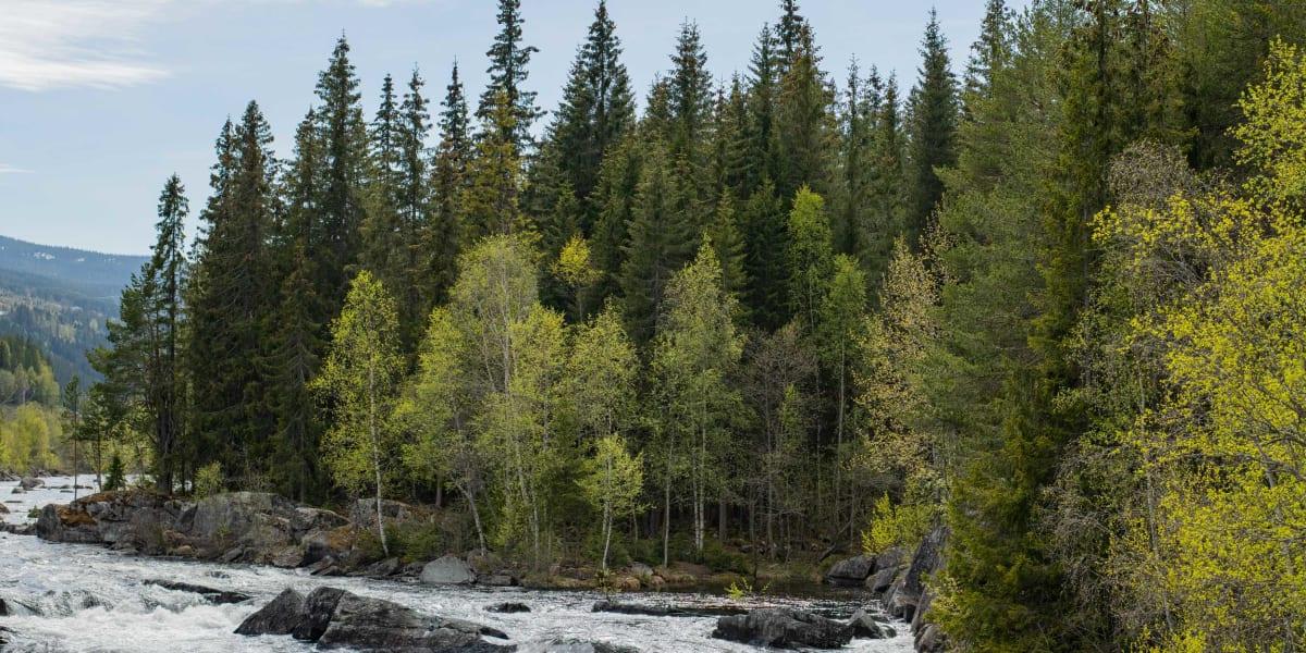 Espegard – en historie om skog, ved og bål