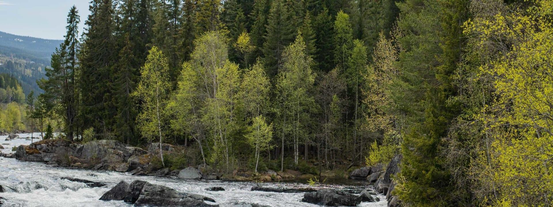 En historie om skog, ved og bål