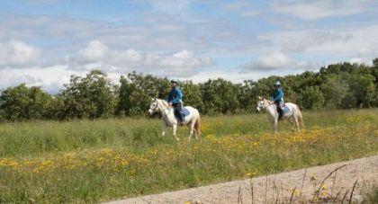 Gala equitazione fise opt