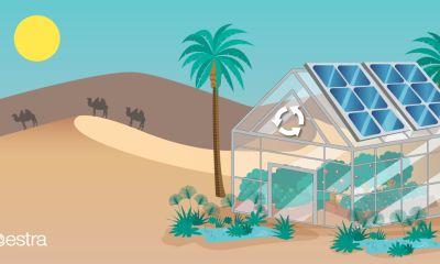 News agricoltura deserto