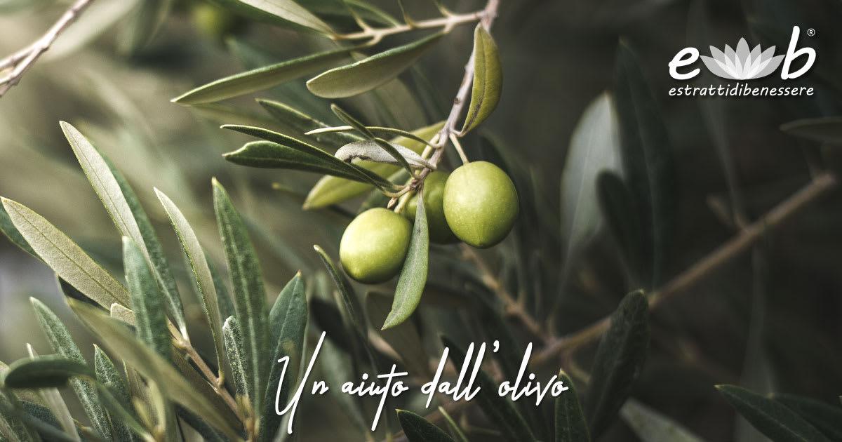 aiuto difese immunitarie olivo polifenoli ciclodestrine vegetali