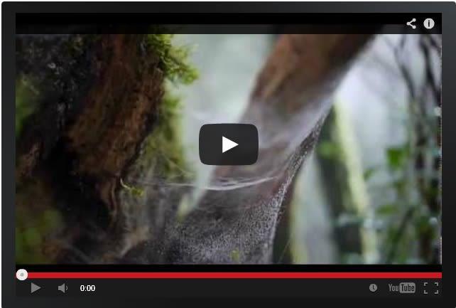 Spider Webs, Anaga Forest Tenerife