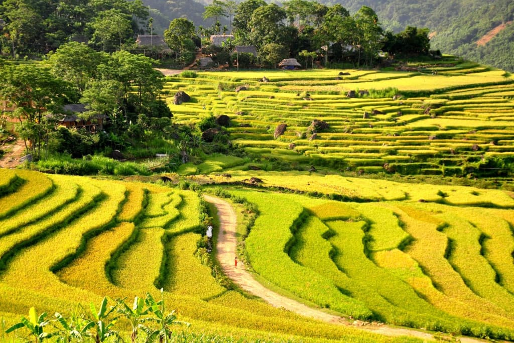 Pu Long Vietnam - paddy field