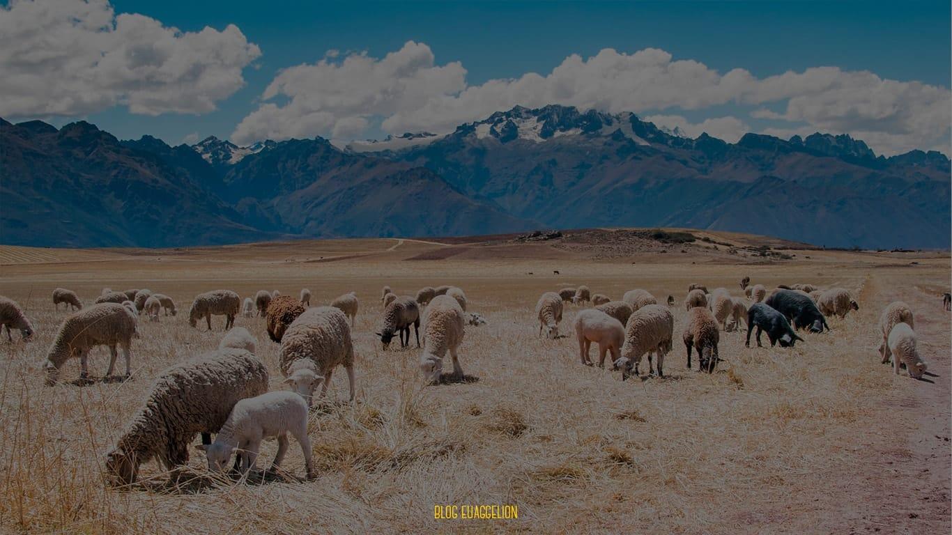 Devocional - Salmo 23
