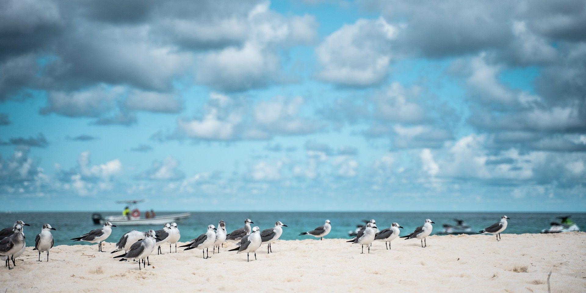 Möwen am Strand