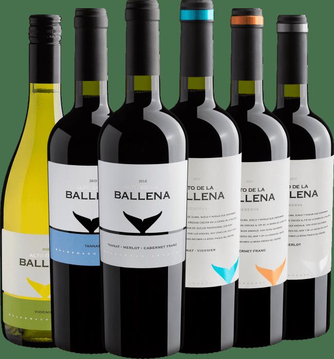 Kit Família Alto De La Ballena - Uruguai