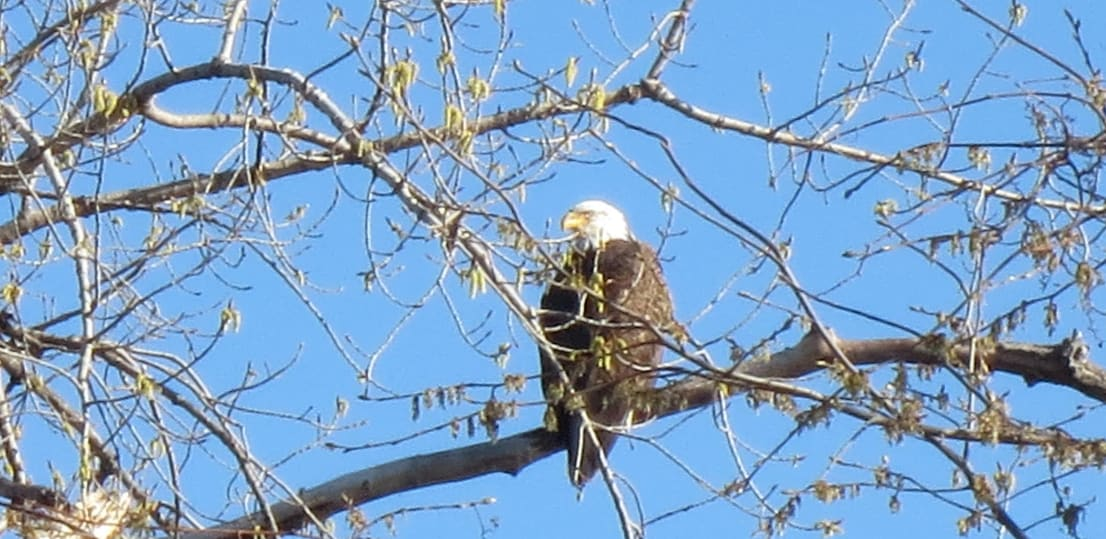 Bald eagles are often spotted on the property!