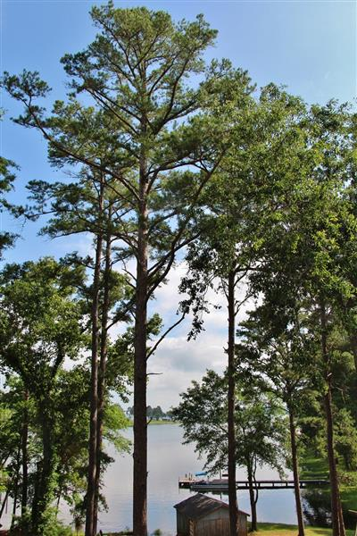 The towering trees provide plenty of shade.