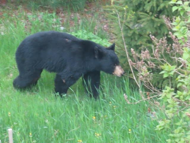 Private Yard | Wildlife Watching