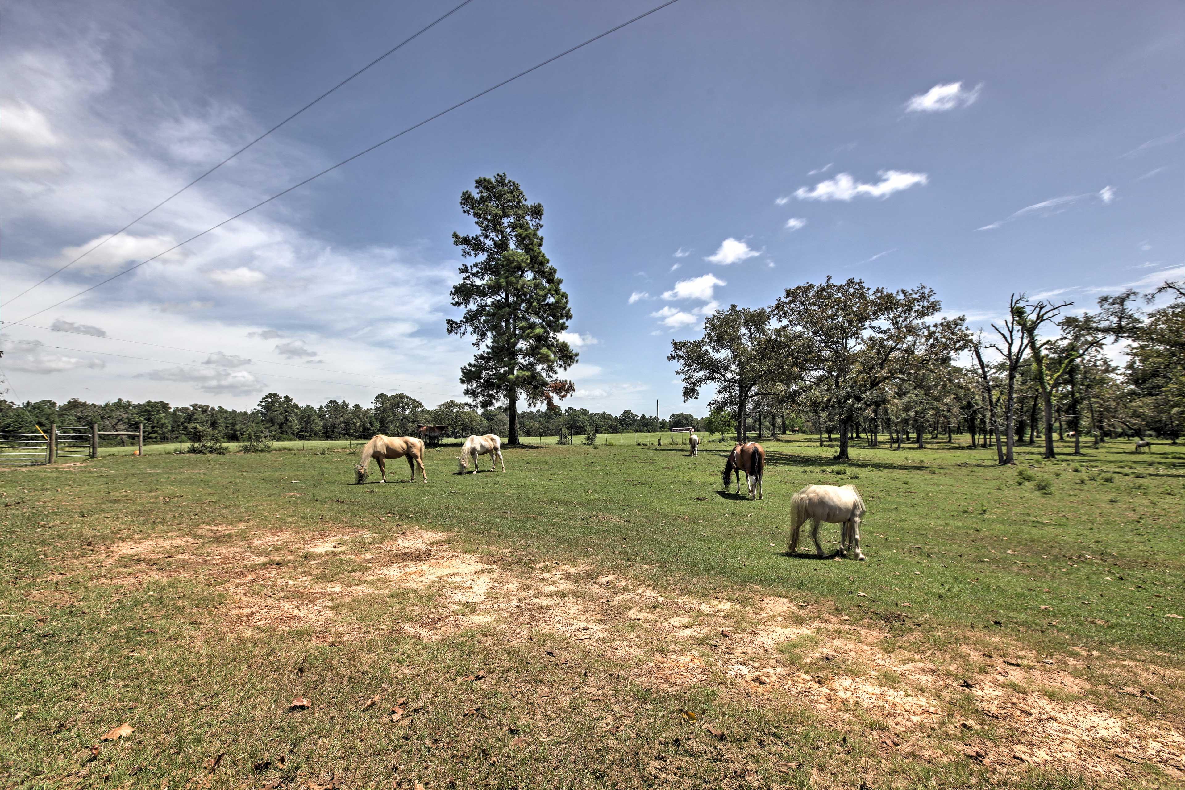 Admire all the farm animals grazing around this Texas cabin.