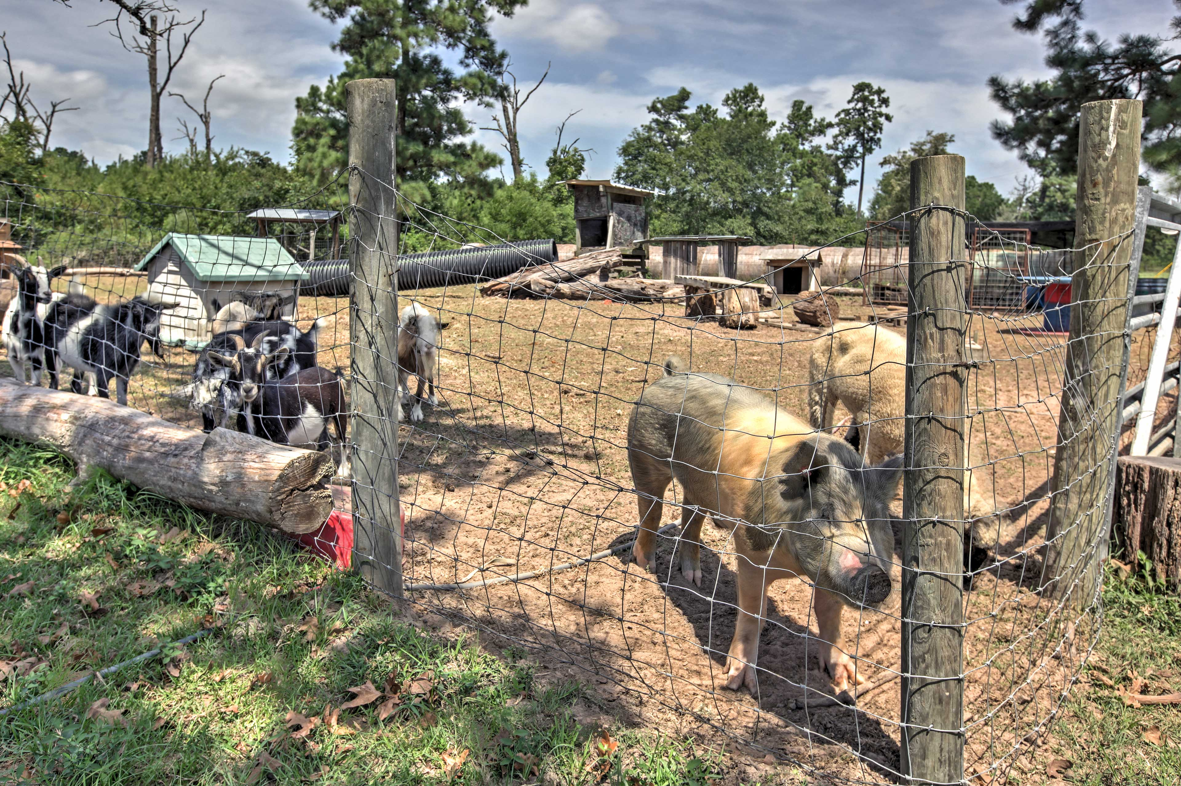 Take a stroll to find the goats and pigs right near this Plantersville cabin.