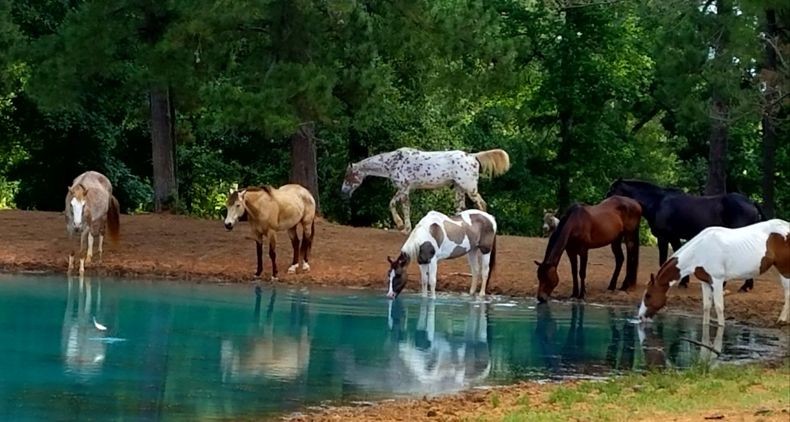 Your kids will love the horses that live on the property.