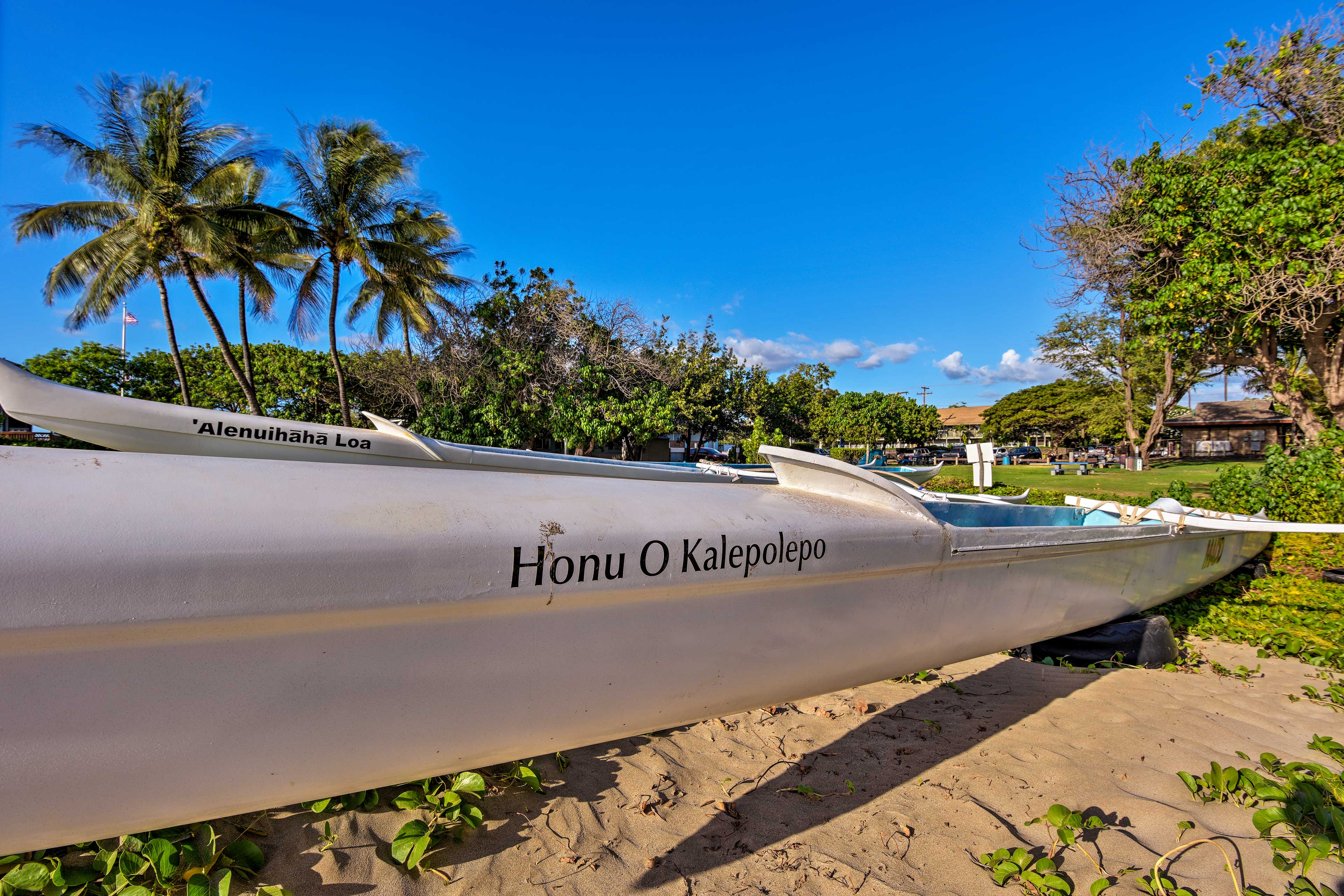 Rent kayaks or go on a catamaran to experience the ocean up close!