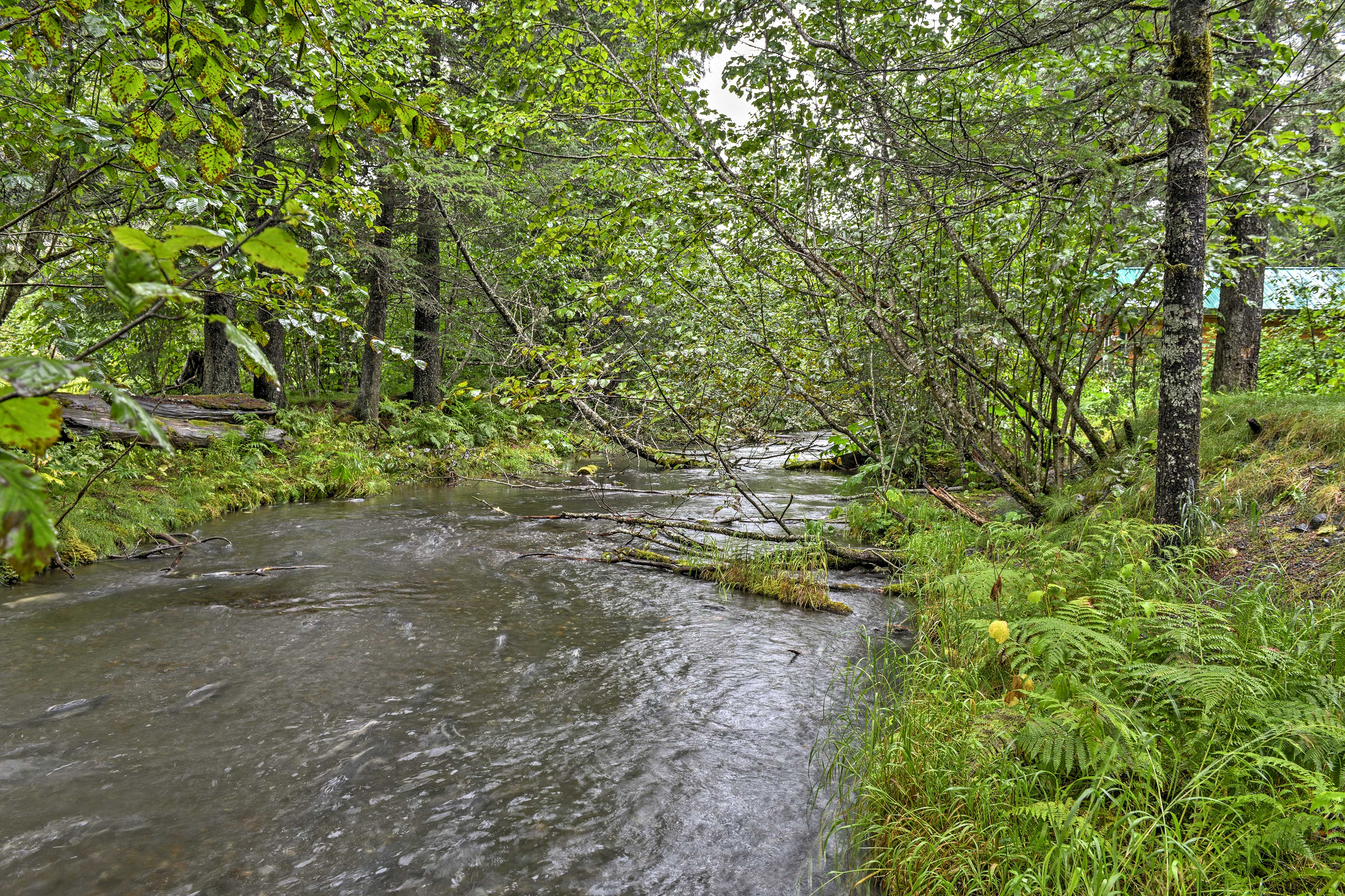 Catch wild salmon in the creek just behind the property.