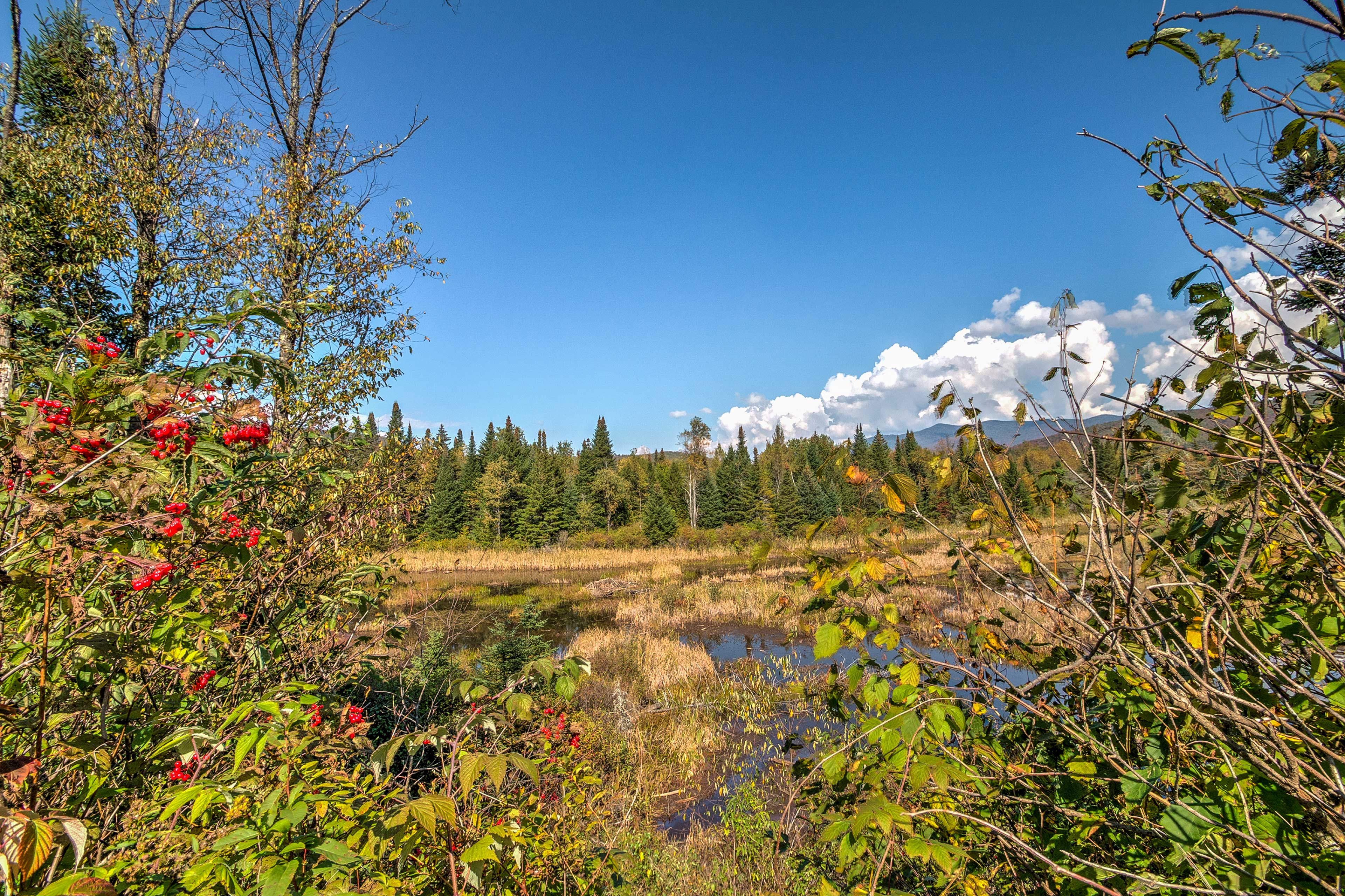 Gorgeous views of the surrounding forest and pond will put you at ease.