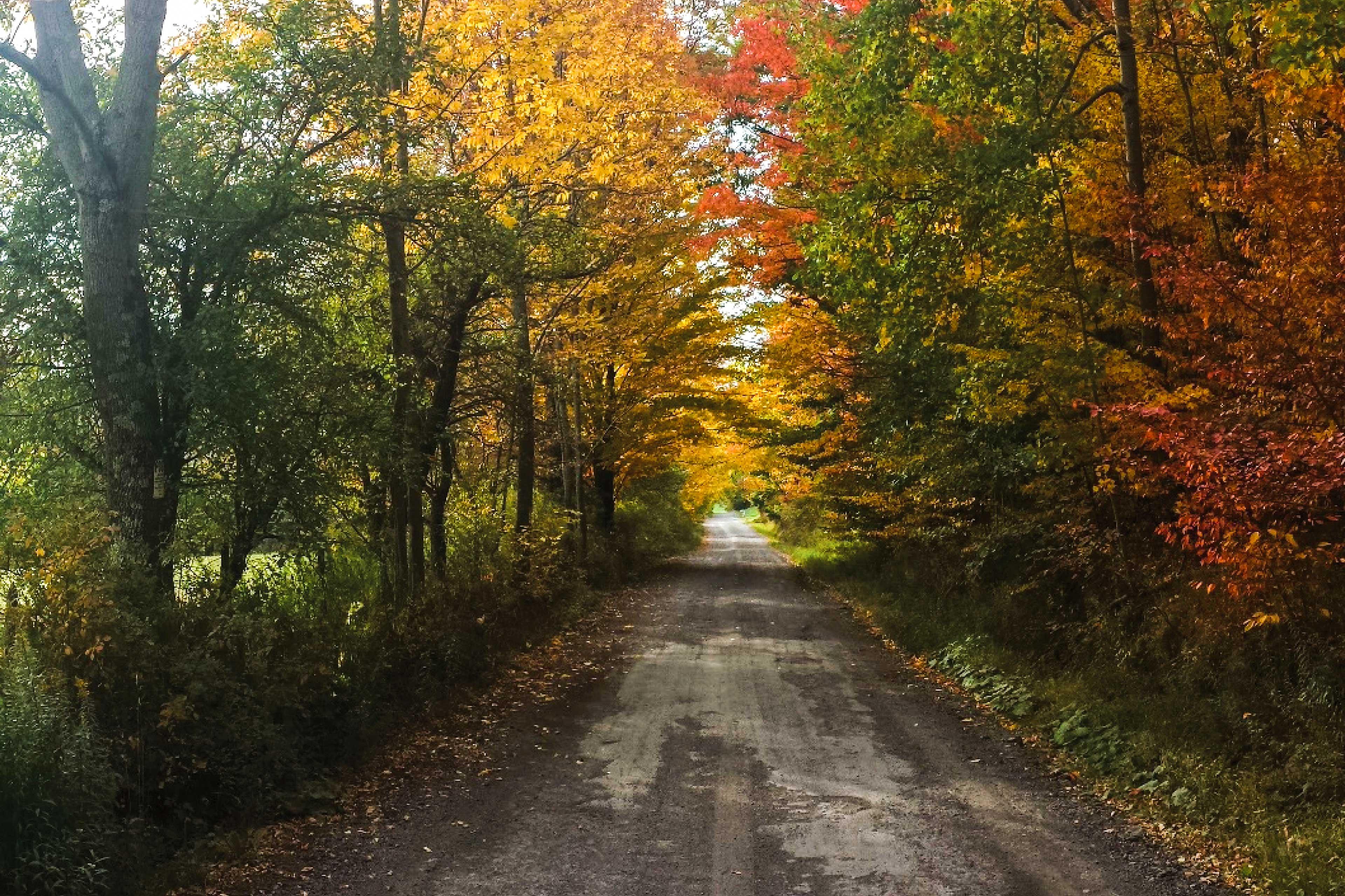 Autumn Drive up to Lazy Bear Lodge