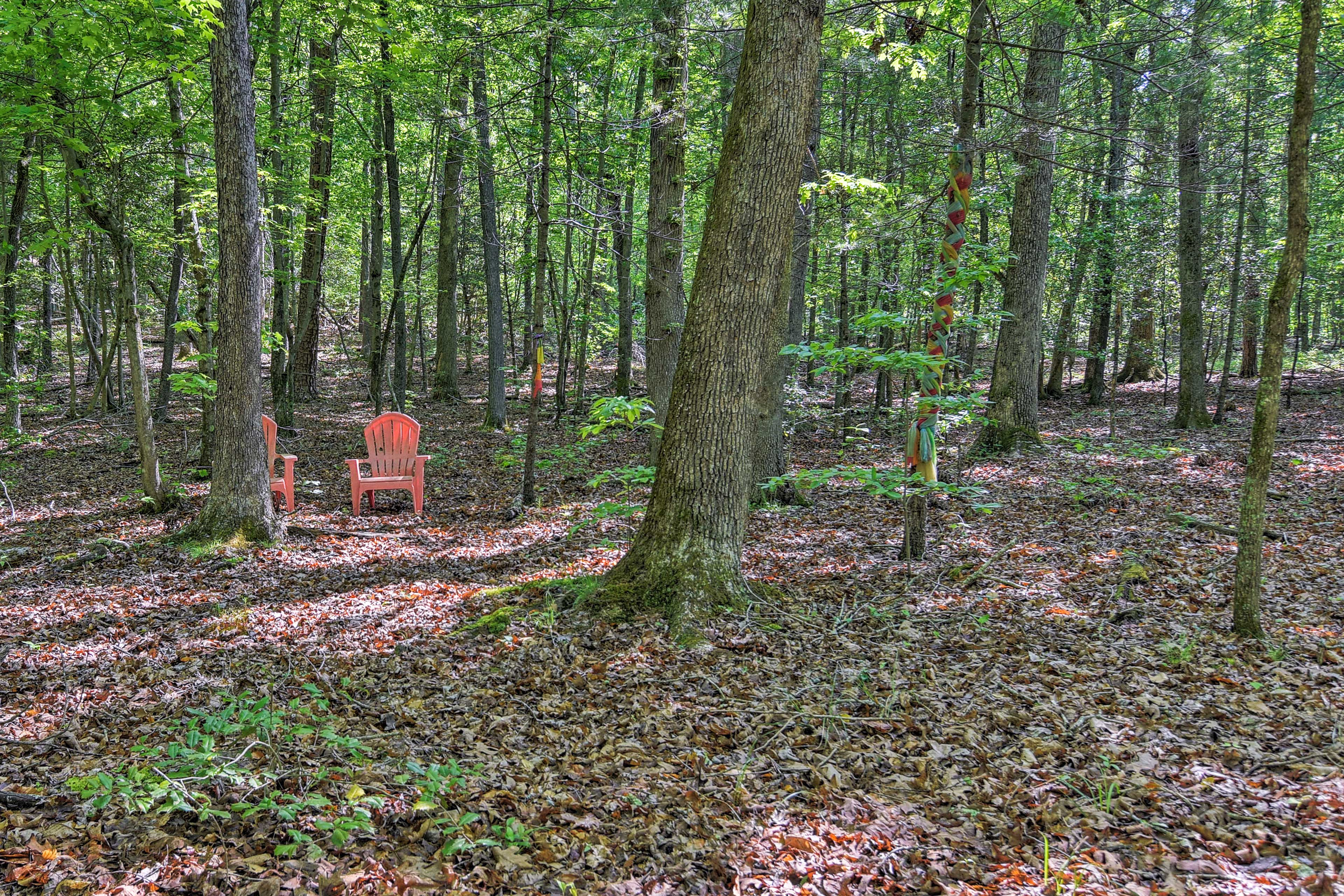 Take time to listen to the sounds of nature in the peaceful national forest.