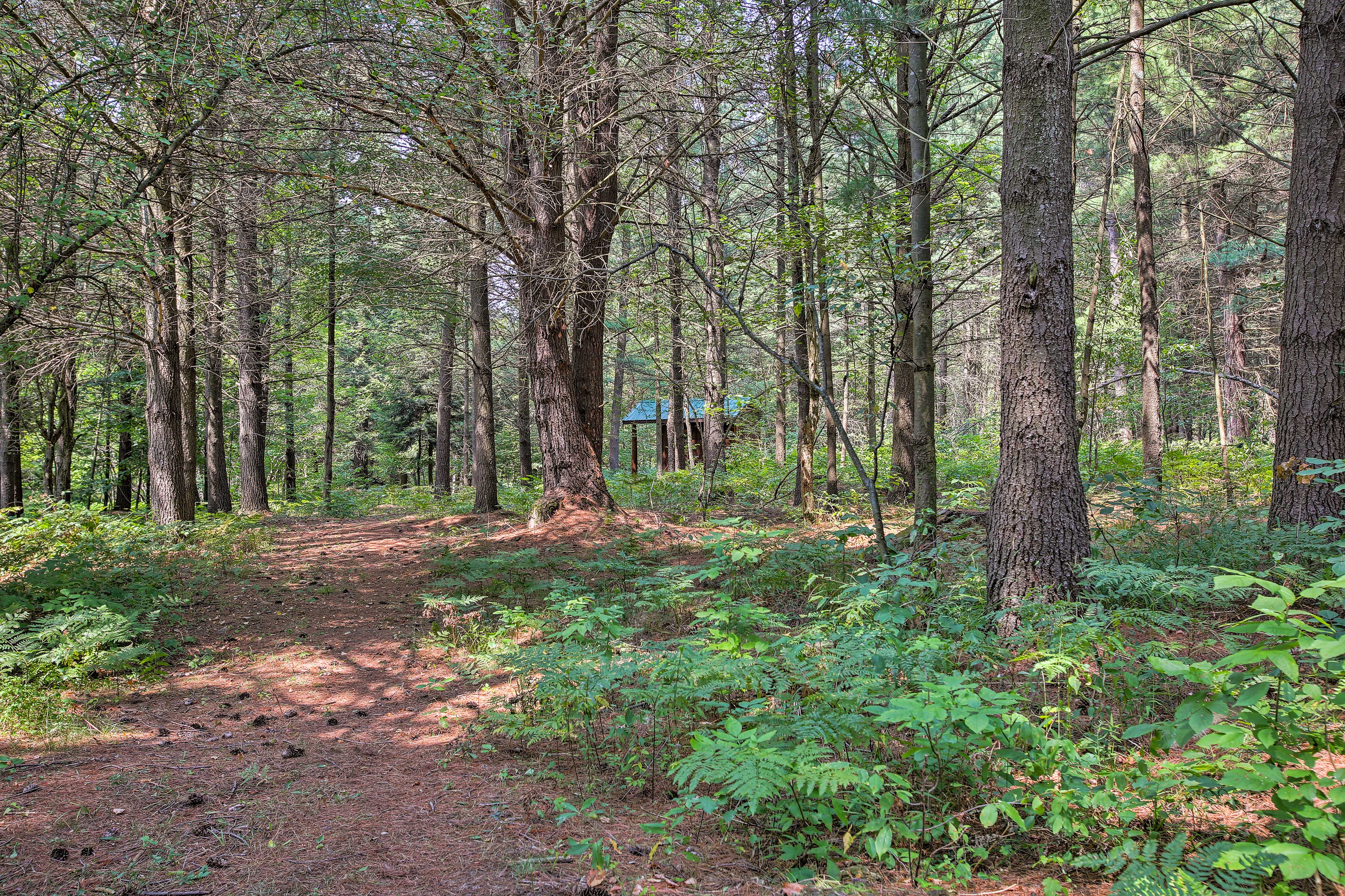 Explore the trails surrounding the cabin. Adventure awaits!