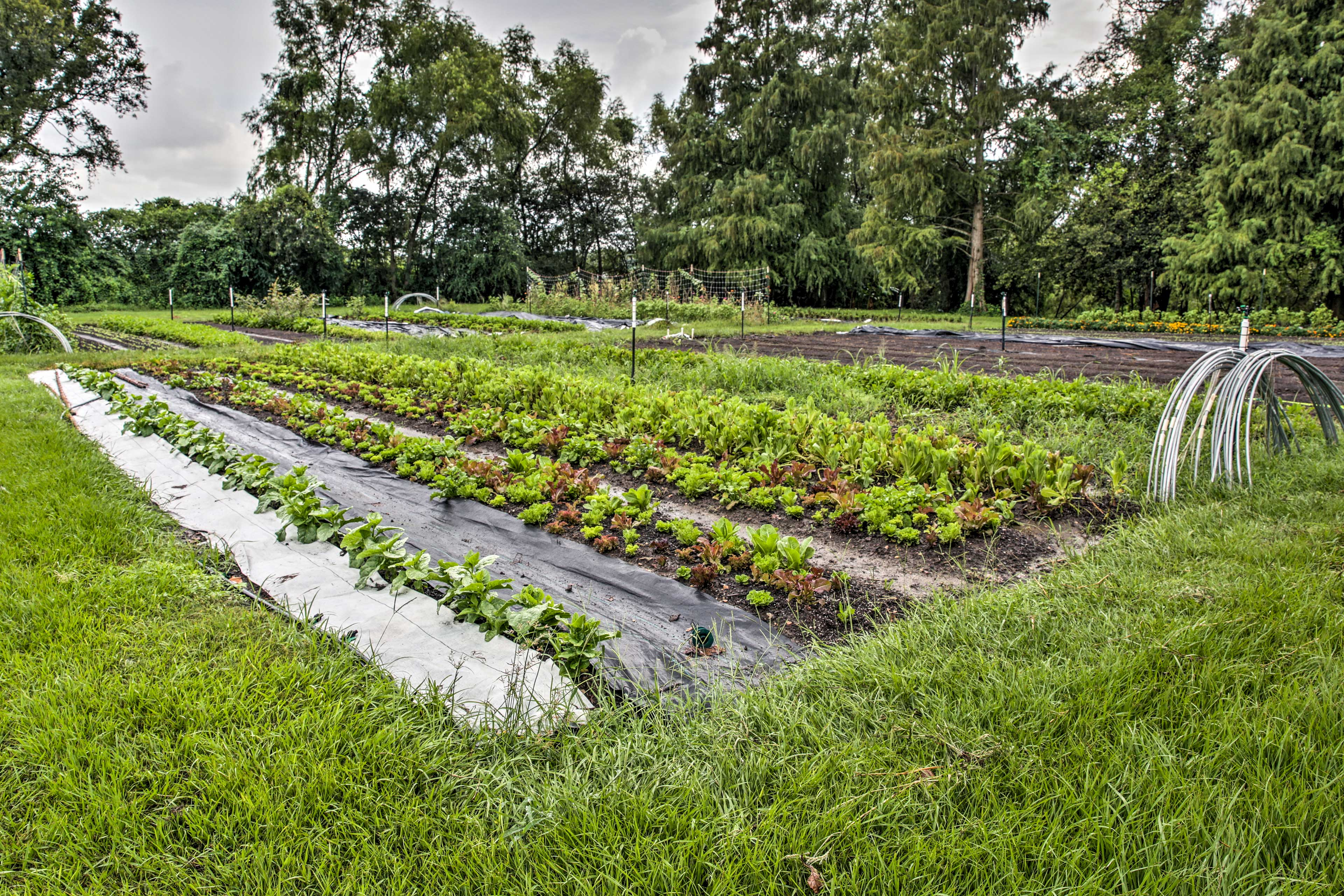 Help yourself to produce at Fullness Organic Farms!