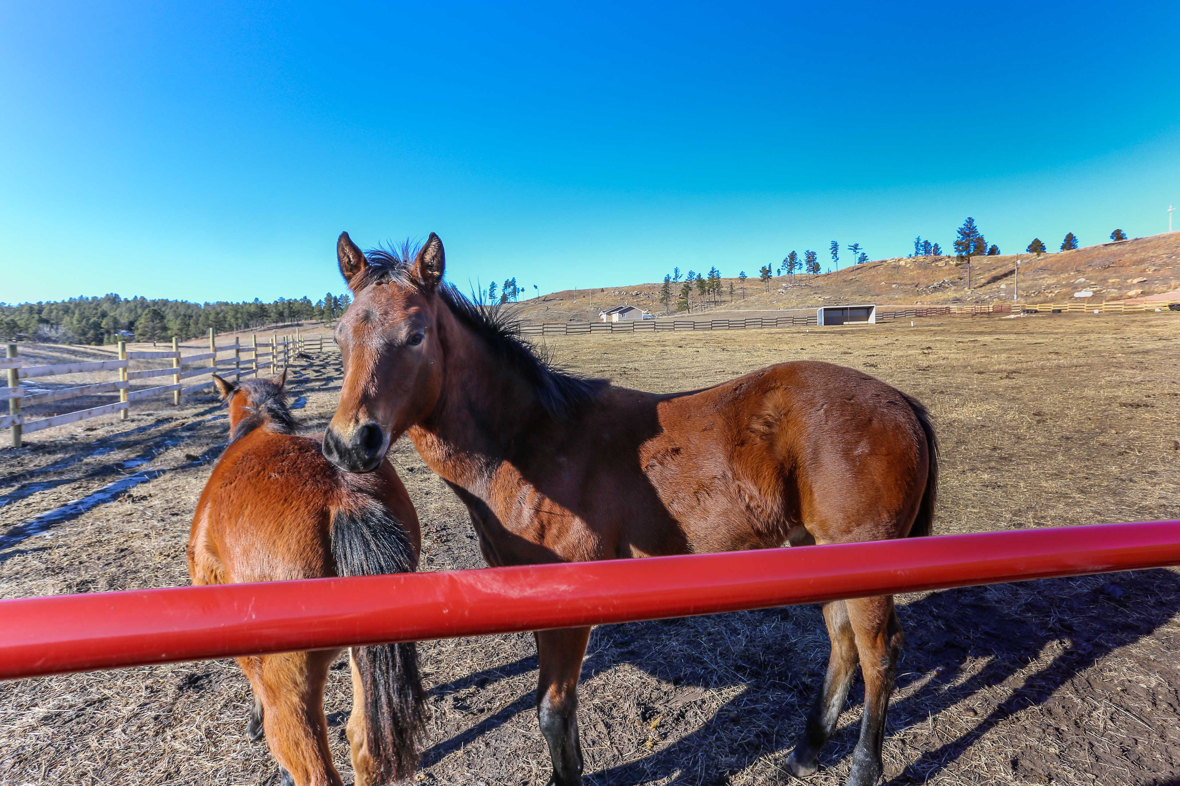 You'll drive by these friendly horses on your way to the cabin.