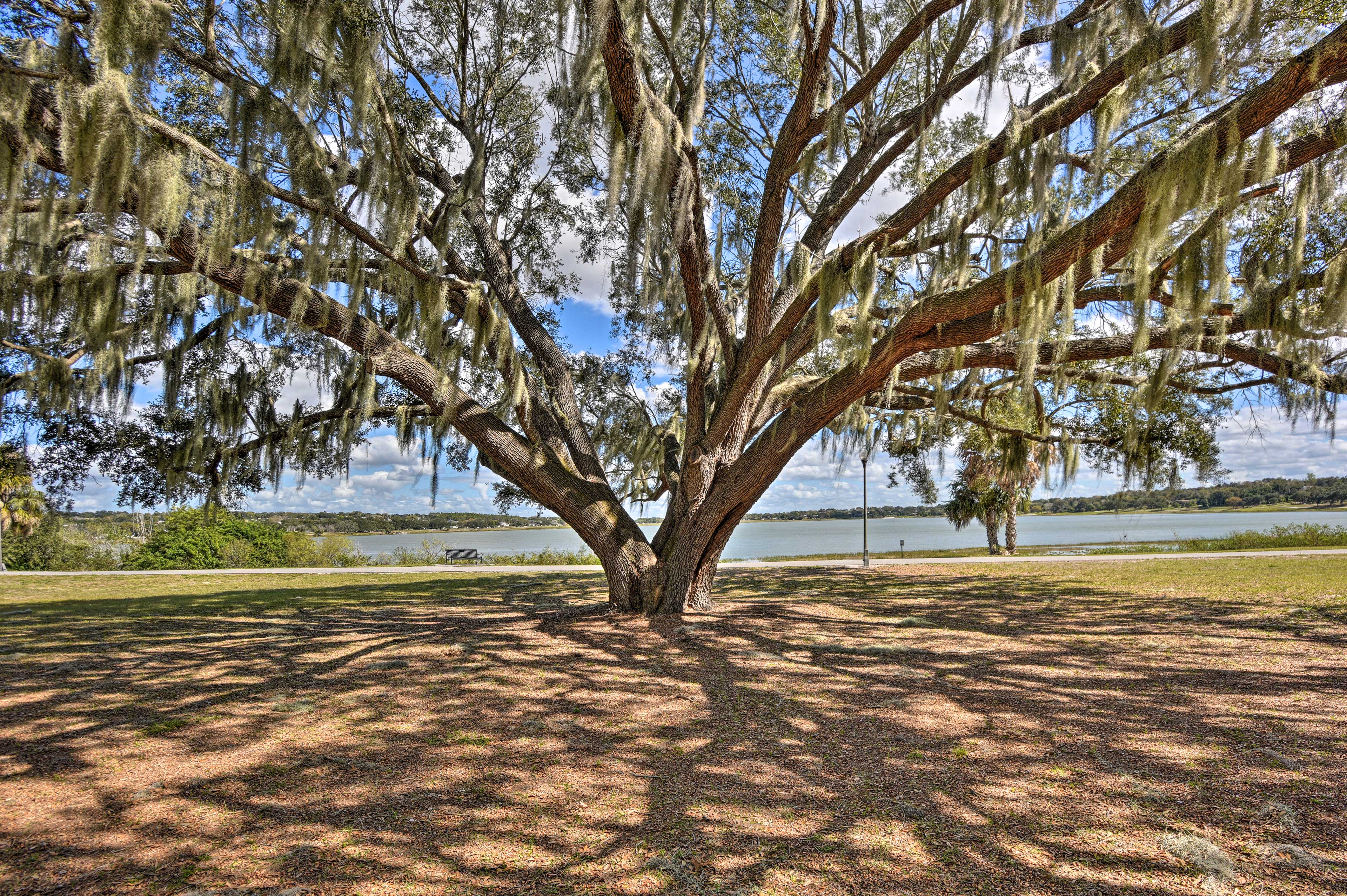 Spanish moss is found throughout Lake Wales.