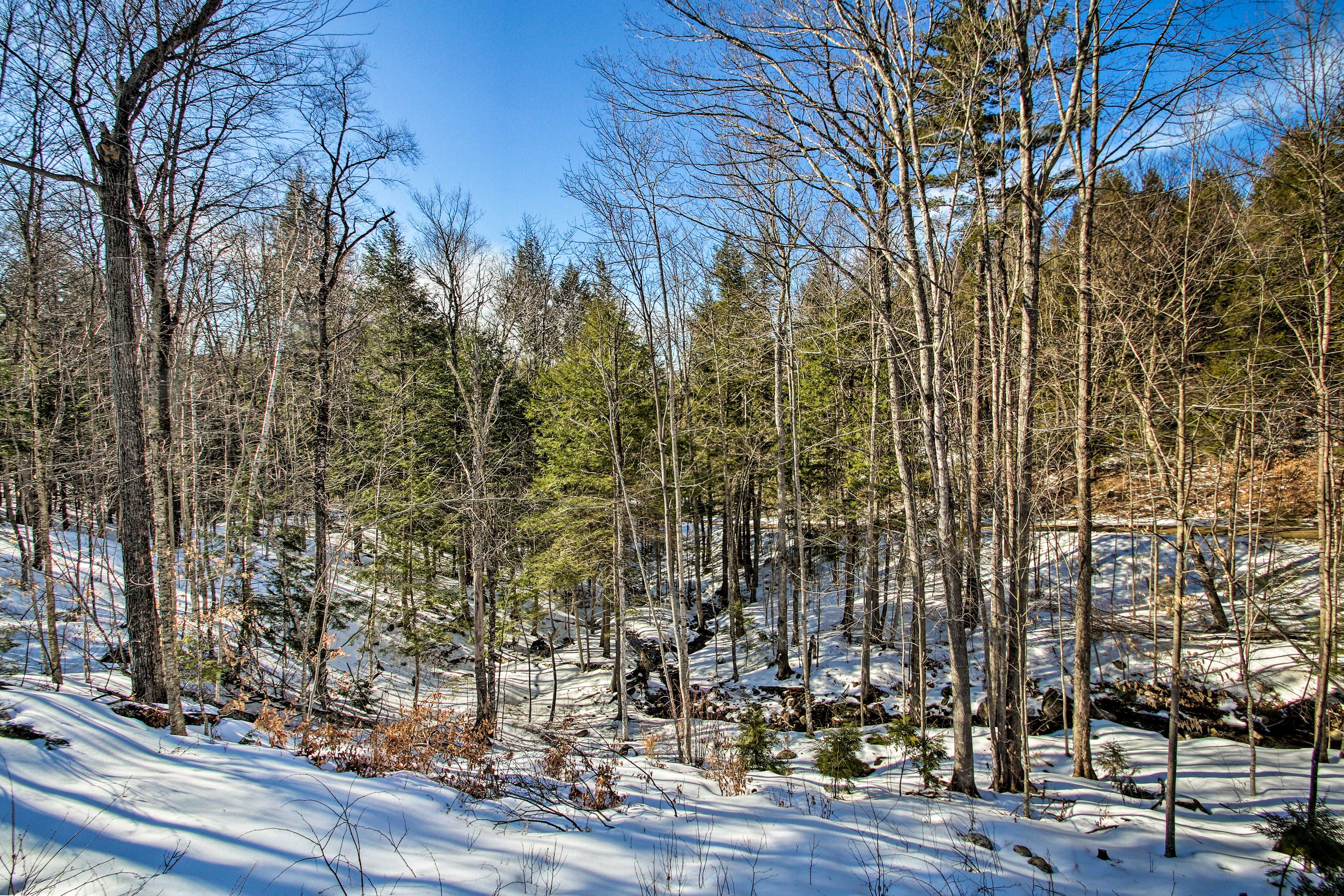 This home boasts unobstructed forest views!