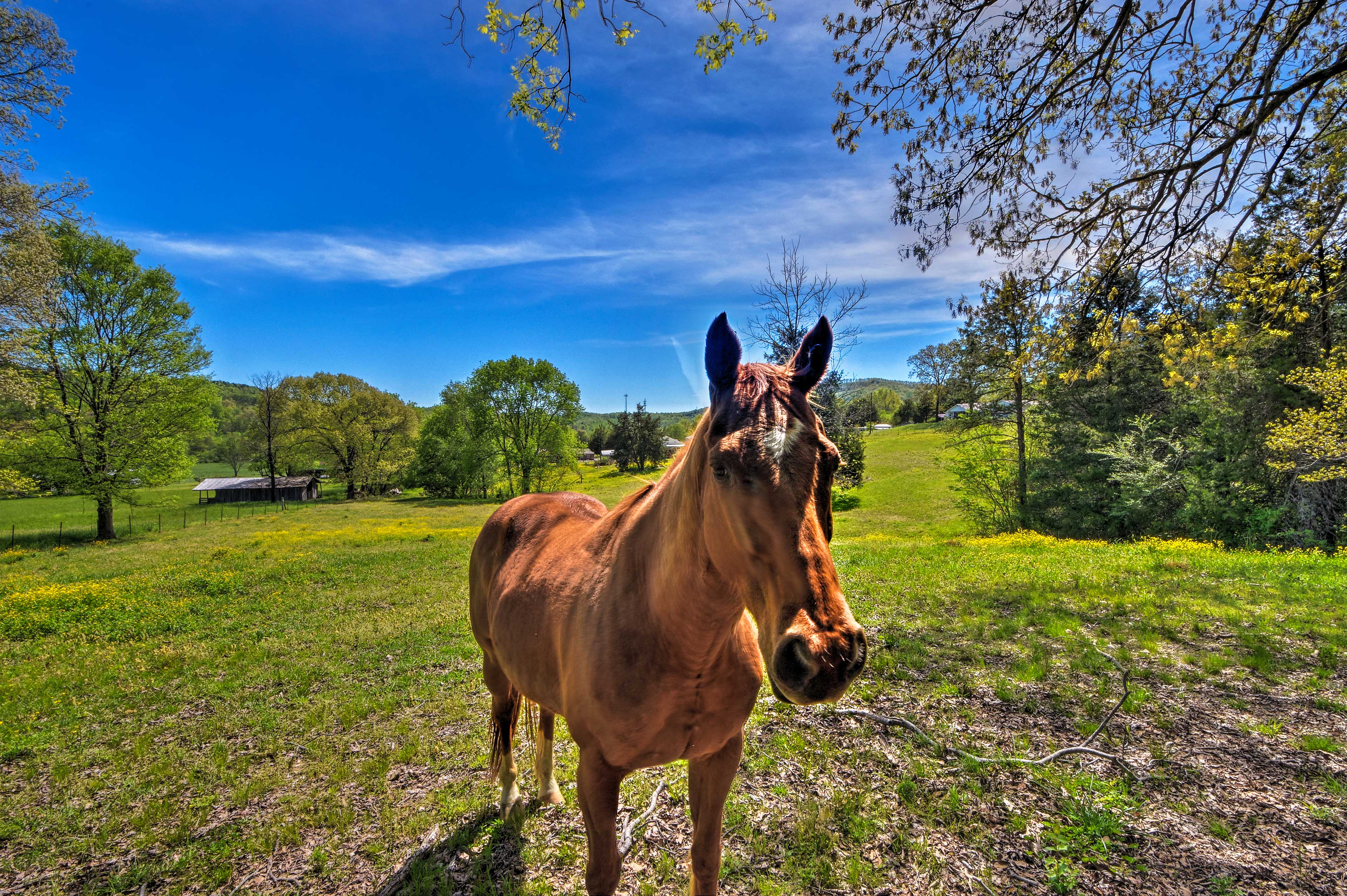 On-Site Attractions   Horses