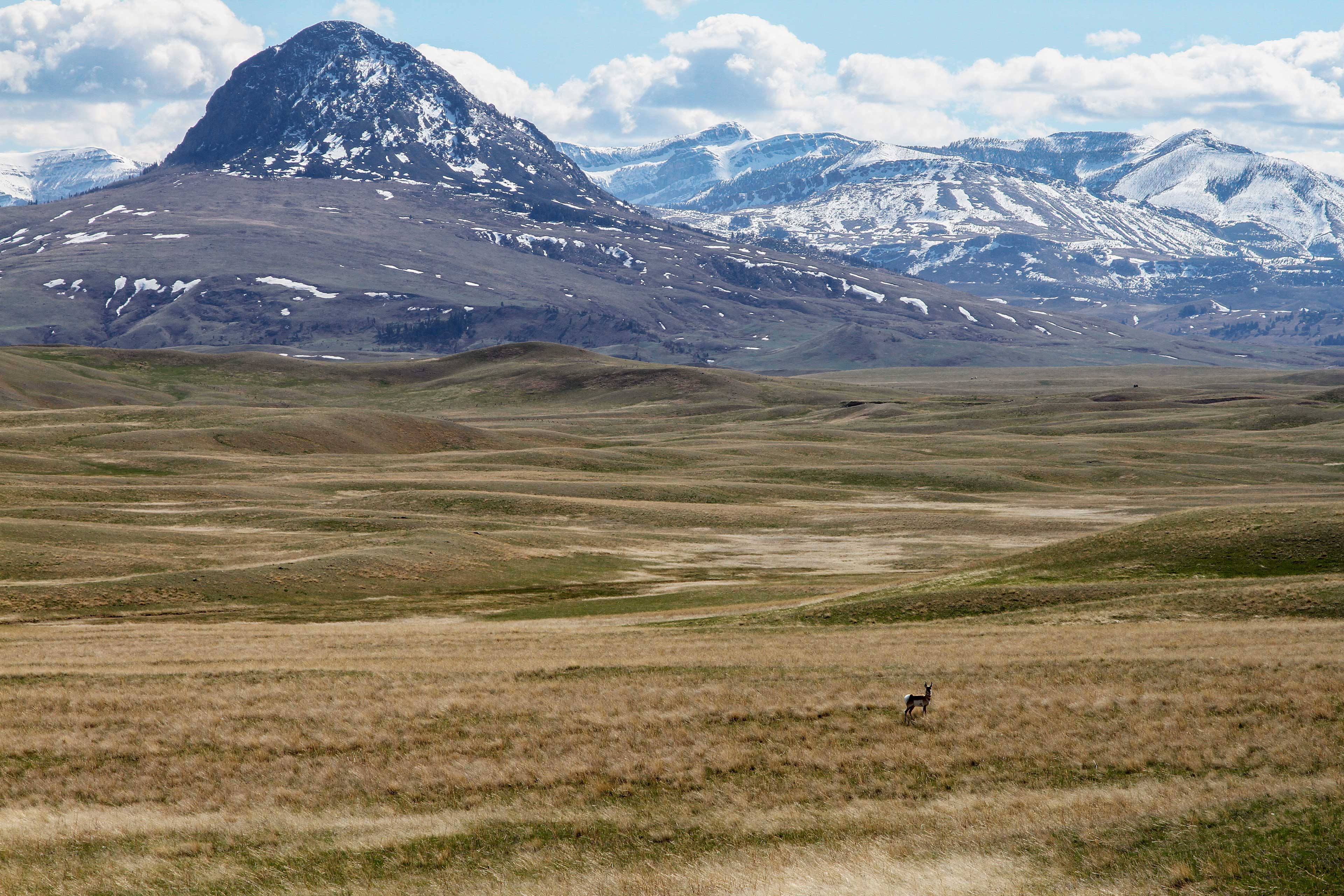 Watch cattle and buffalo graze in the surrounding fields!
