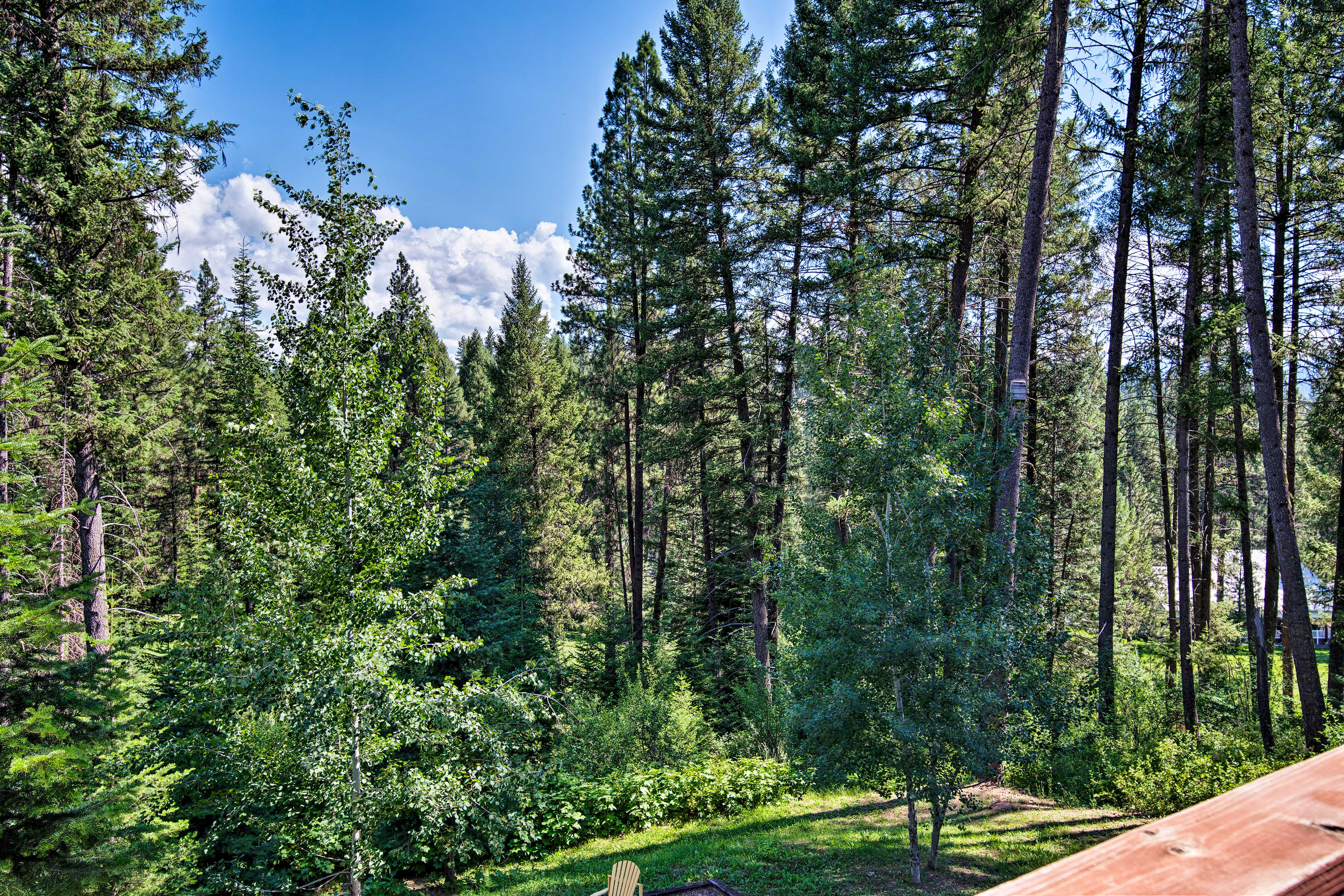 You'll have plenty of privacy from the wall of pine trees.