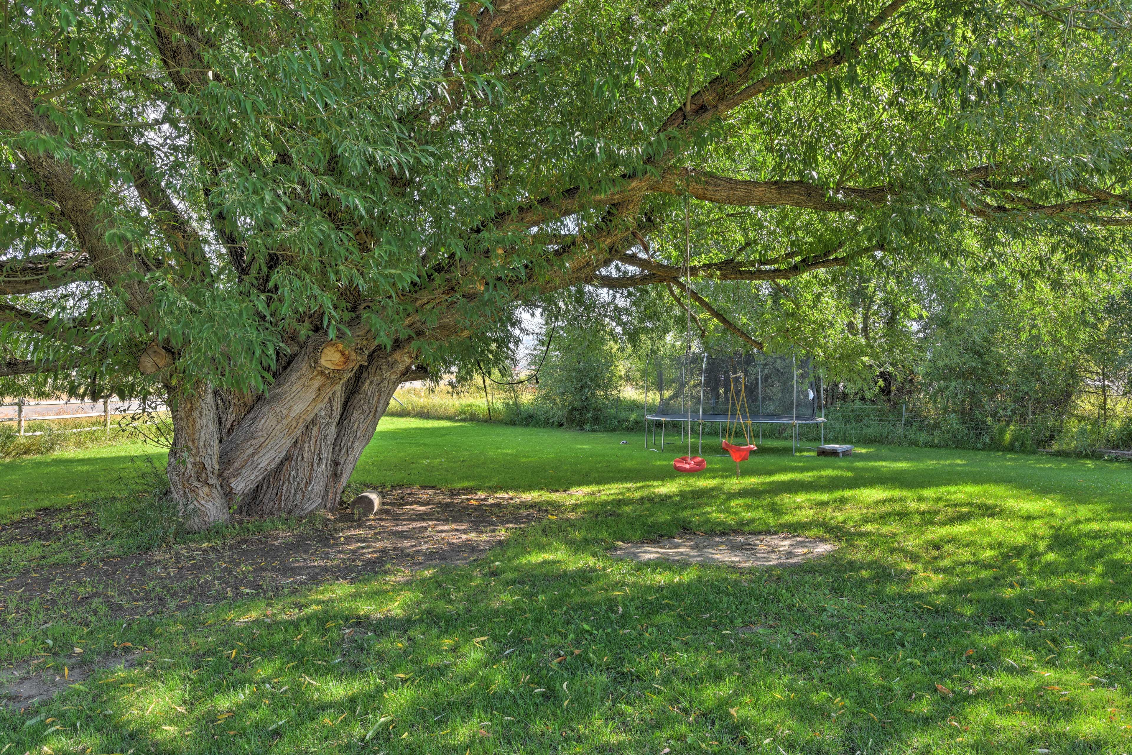 Private Yard | Children's Toys | Trampoline