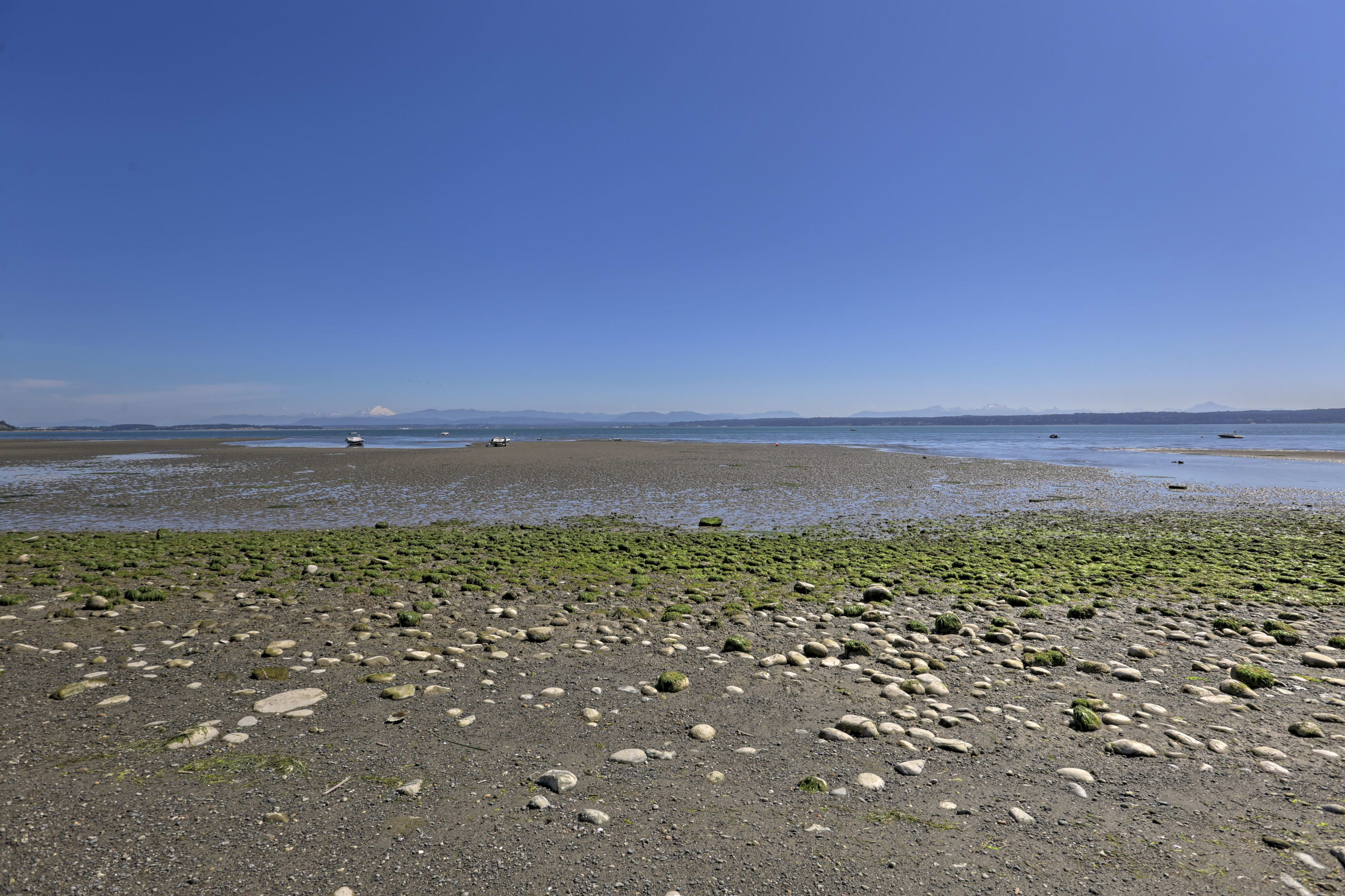 You're sure to find loads of sea creatures during low tide.