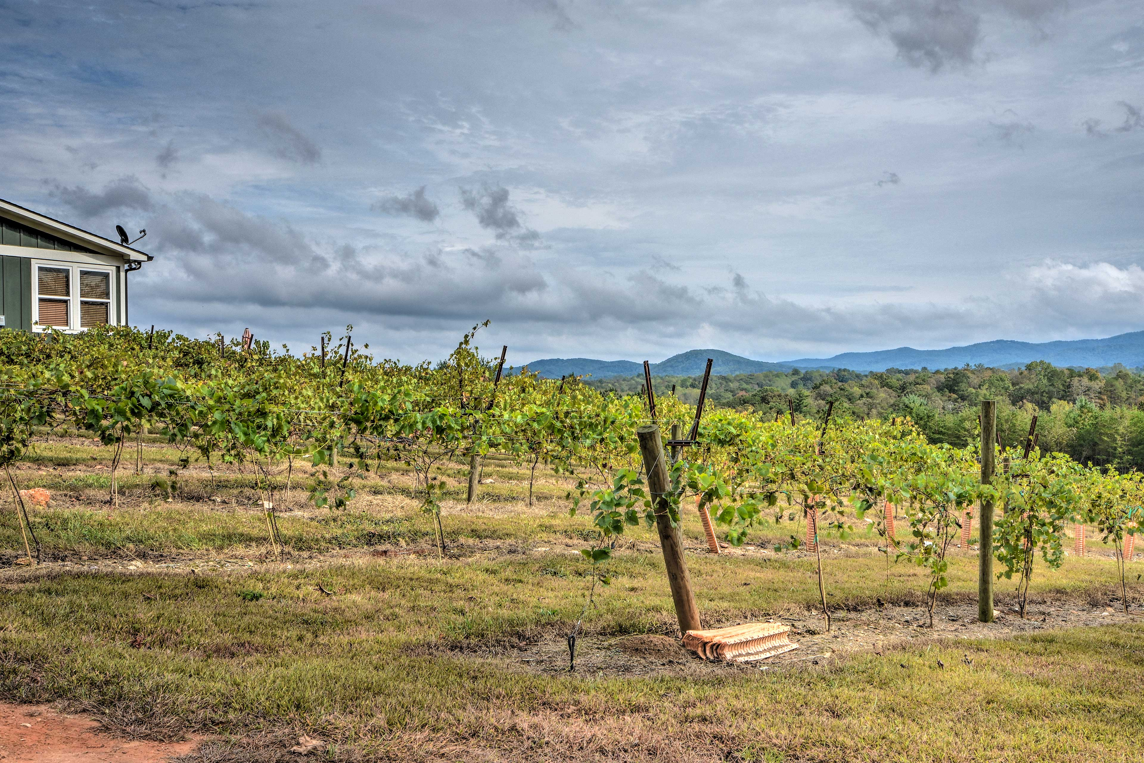 See what kind of grapes are growing at the vineyard.