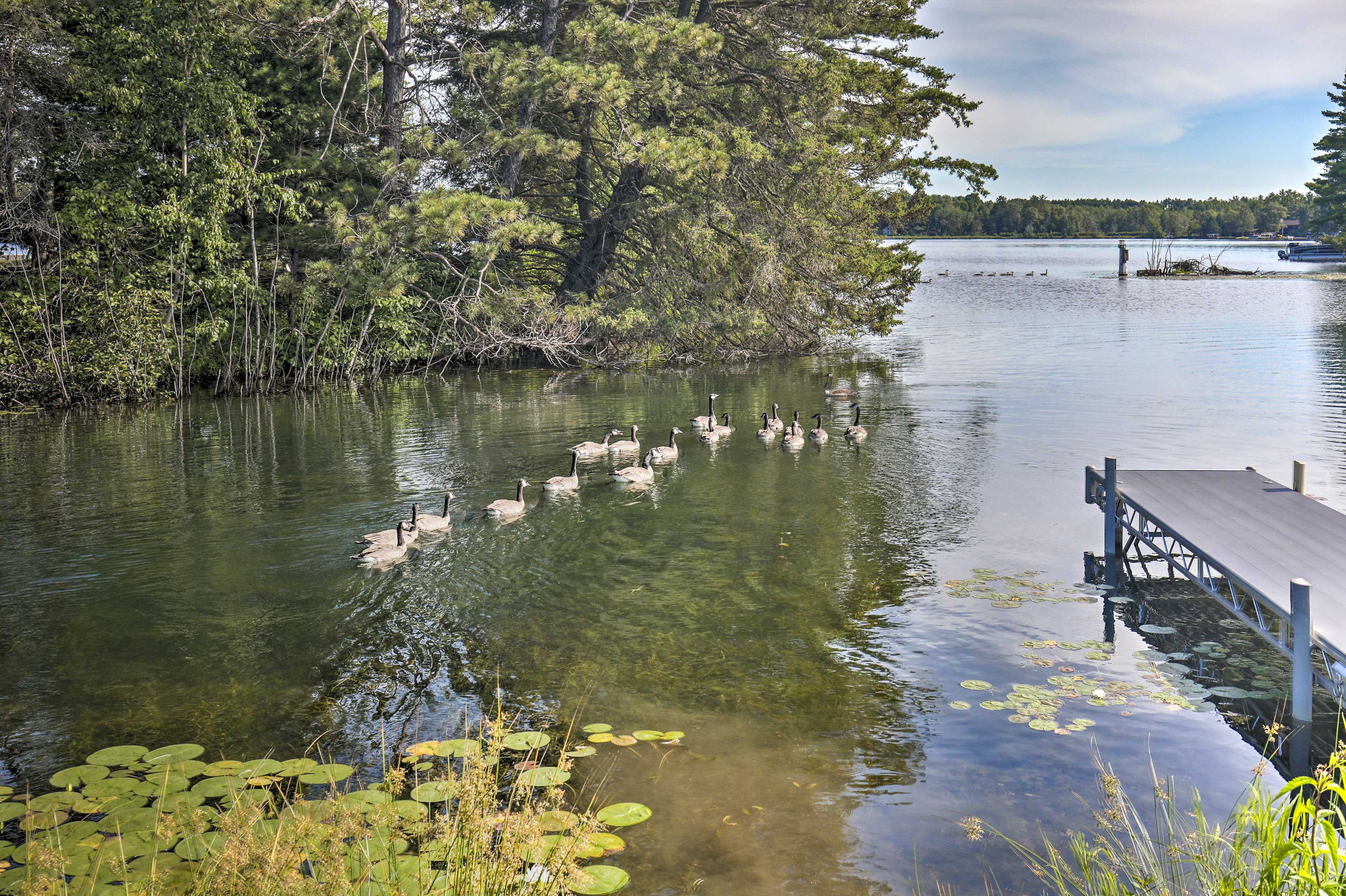 Watch the ducks float by.