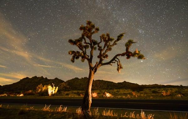 Stars at night in California's Joshua Tree National Park