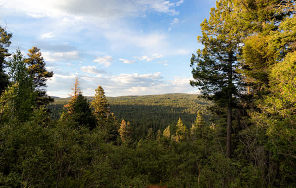 Image of Lincoln National Forest