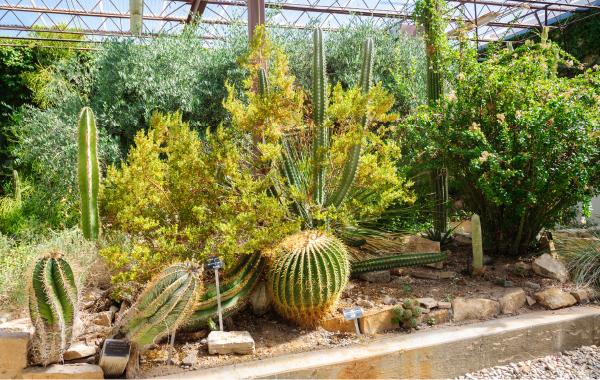 Living Desert Zoo and Gardens in Palm Springs, California