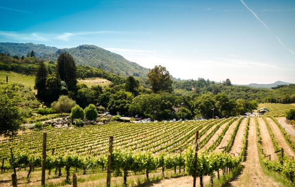 Vineyard in Sonoma, California, one of the best wine regions in the U.S.